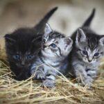 8 consejos para ayudar a su gato a superar el exceso de apego