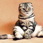 8 ideas para mantener ocupado a su gato en el interior de la casa