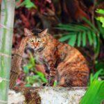 Mi gato se tira pedos: ¿qué debo hacer?