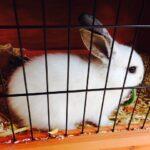 Cómo hacer una jaula para su conejo