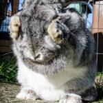 ¿Por qué mi conejo patea la jaula?